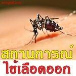 สถานการณ์ไข้เลือดออกในประเทศไทย สัปดาห์ที่ 40/2559