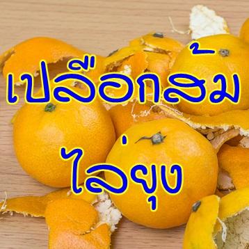 เปลือกส้มไล่ยุง