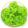 กรีน คอรัล greencoral 100 เมล็ด