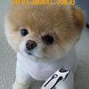 ตัดขนสุนัข ปัตตาเลี่ยนไฟฟ้า Zowael