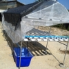 ชุดปลูกสำเร็จ NFT 240(รางเปิด) ขนาด 1.6x6 เมตร(มีหลังคา)