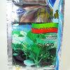 คะน้ายอด (Chinese Kale) เจียใต๋