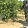 น้ำส้มควันไม้บรรจุ 6 ลิตร ผลิตจากถ่านไม้ไผ่คุณภาพดี ความเข้มข้น 100%