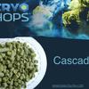 Cascade Cryo Hops (LupuLN2 Pellet) - 2oz.