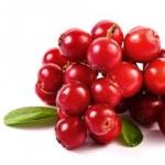 แครนเบอร์รี่ (cranberry) 10เมล็ด/ซอง