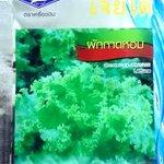 กาดหอม lettuce เจียใต๋