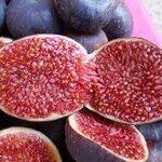 mini purple fig 15เมล็ด/ซอง