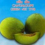 เมล่อน GREEN NET 10 เมล็ด