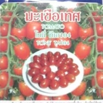 มะเขือเทศ โทนี่ tomato tony เพื่อนเกษตร
