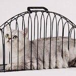 กรงอาบน้ำแมว รุ่น 2 ประตู สีดำ (ขนาดเล็ก 45*14.5*25 cm)