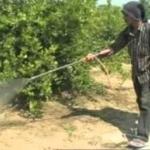 น้ำสมควันไม้ สารพัดประโยชน์