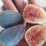 black orak fig 15เมล็ด/ซอง