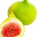 green big fig15เมล็ด/ซอง