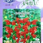 ดอกซัลเวียช่อโปร่ง Salvia เจียใต๋