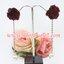 ต่างหูดอกไม้ผ้าสีไวน์แดง ระย้าสร้อยเพชรปลายมุก thumbnail 1