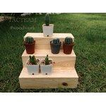 ชั้นวางโมเดล/ตุ๊กตาจิ๋ว/ของสะสม อเนกประสงค์ ไซส์M งาน Mini-Furniture ไม้สนเก๋ๆ สำหรับวางต้นไม้มงคล / ต้นไม้เล็ก / ตุ๊กตา โมเดล/ของสะสมอเนกประสงค์ต่างๆ ผลิตและจัดจำหน่ายโดย... TACTEAM #woodwork