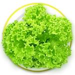 กรีน คอรัล greencoral 1,000 เมล็ด(แบบเคลือบ)
