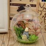โทโทโร่ ประดับในโหลแก้ว(Tororo)